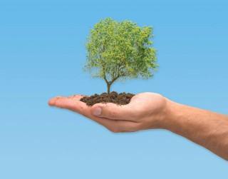 tree-planting-stuffer-320x251