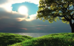 pohon-rumput-pantai-laut-matahari-mendung