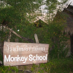 sekolah monyet